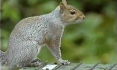 This Squirrel Is Better Than Tom Cruise Of Mission Impossible. Amazing Stunts!