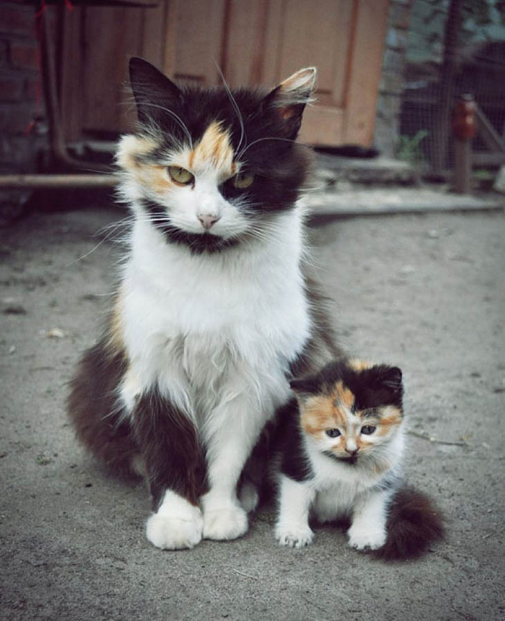 Animals With Their Sweet Little Babies