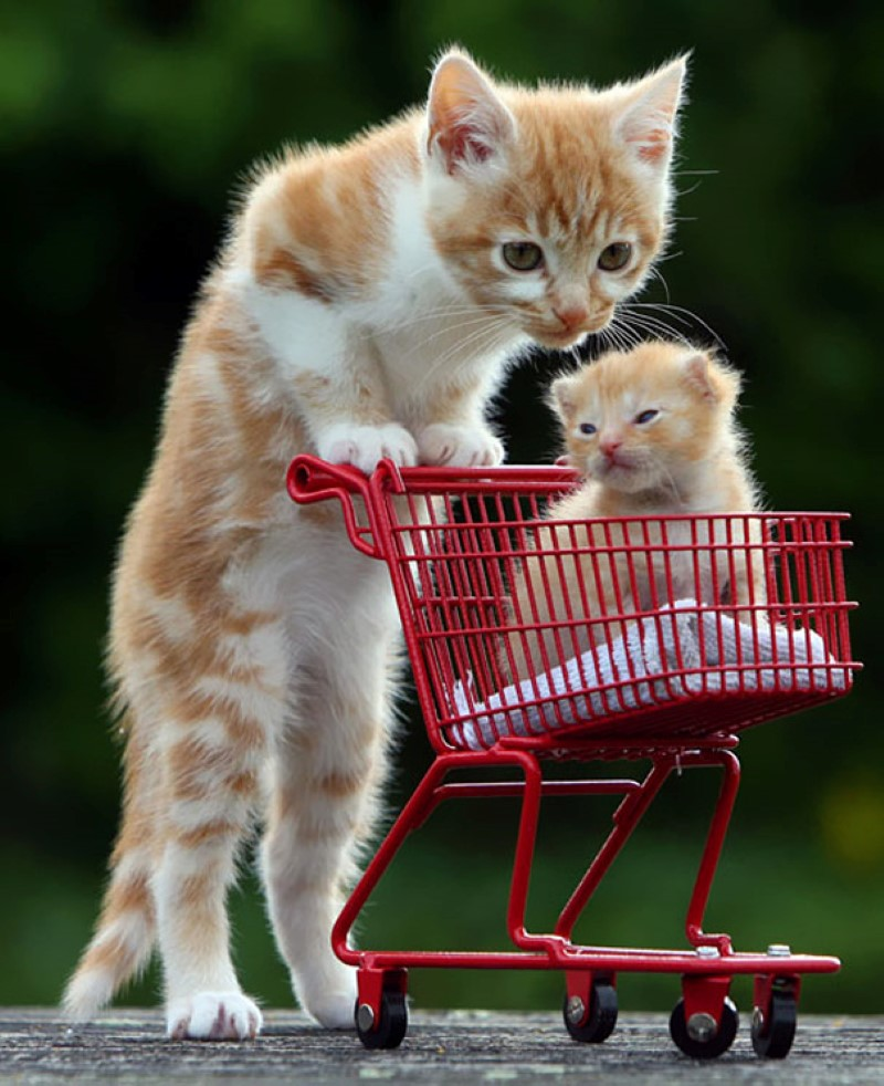 animals babies cute sweet awesome credit imgur