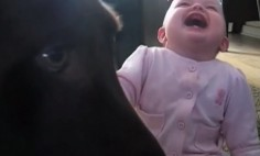 This Is What Happens When You Leave A Baby With A Dog… You Will Die Laughing!