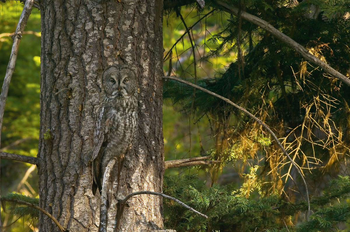 60 Camouflaged Animals Hidden In Plain Sight How Many Can You Spot