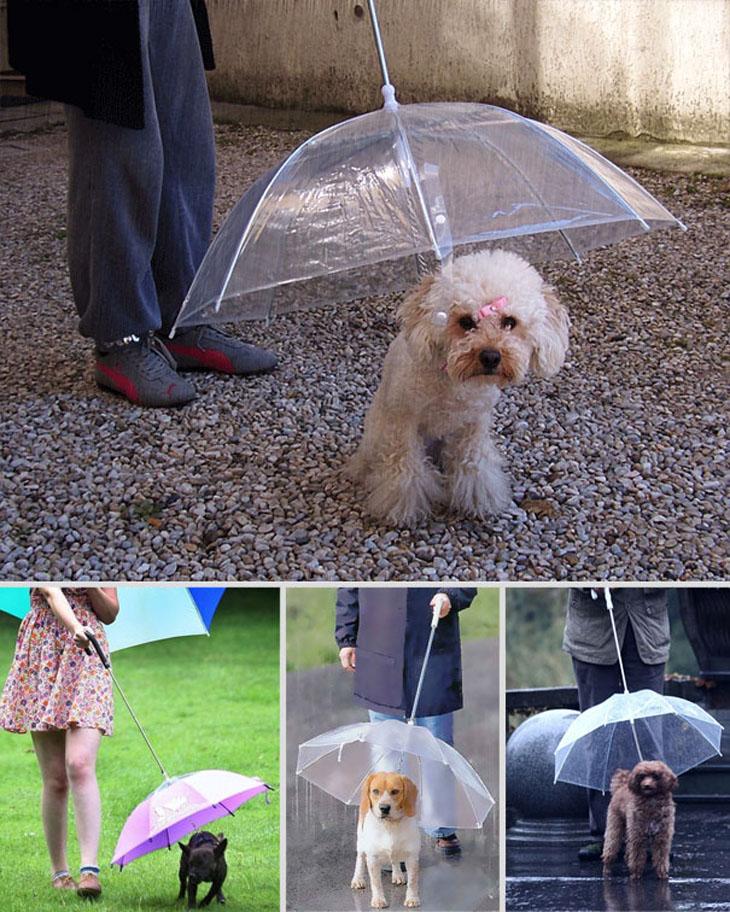 The Dogbrella