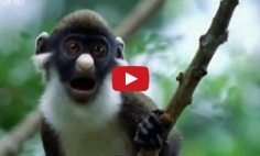 This Is Simply The Most Hilarious Animal Video You'll Ever See!