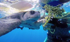 Diver Rescued A Sea Turtle Tangled In A Rope. Breathtaking!
