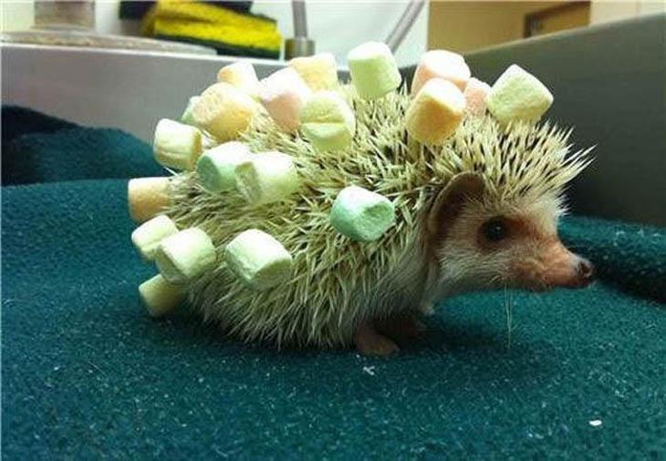Cute Hedgehogs