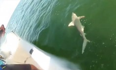 A Guy Caught A Shark While Fishing, What Happens Next Will Make Your Jaw Drop.