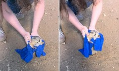 This Gopher Stuck In It's Hole Because He Ate Too Much. It's Hysterical!