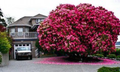 These Are The Most Incredible Trees In The World. I Like #11!