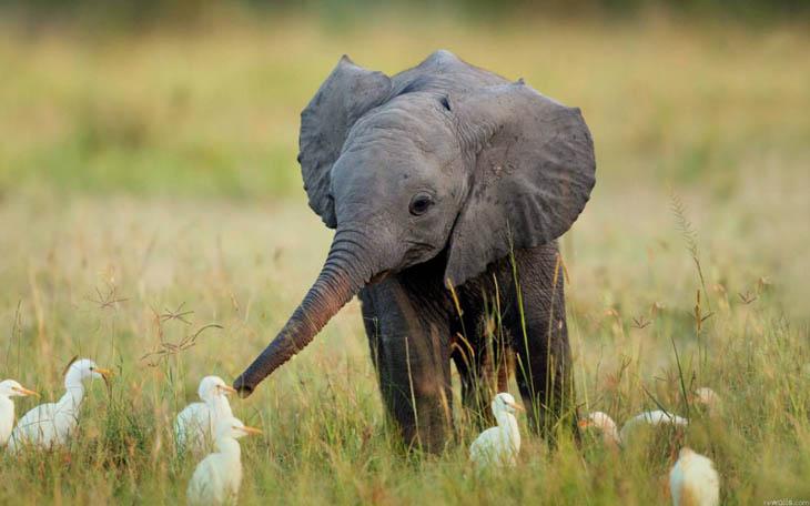 animal photos captured at perfect time