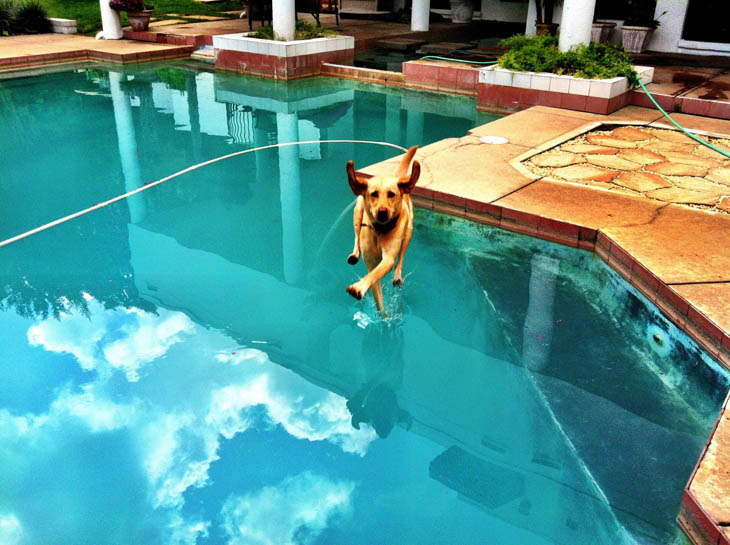 Perfectly Timed Dog Photos