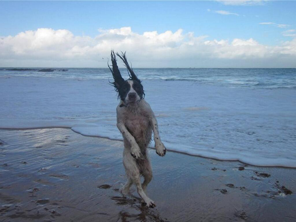 The Most Perfectly Timed Dog Photos Youve Ever Seen - 25 hilarious brilliantly timed dog photos