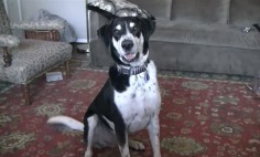 This Talking Dog Will Make You Smile. Don't Miss It!
