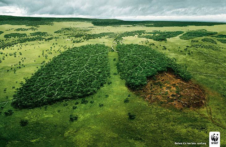 Deforestation And The Air We Breathe: Act Before It's Too Late.
