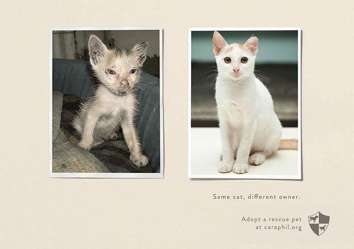 Same Pet, Different Owner.