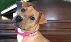 Kid's Mother Bring Home A Rescued Pit Bull, You Won't Believe What Happened Next.