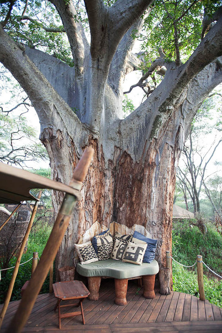 Awesome Lounging Places - This one with the large tree.