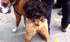 Cute, Funny And Most Adorable Halloween Pet Costumes To Spook You This Halloween.