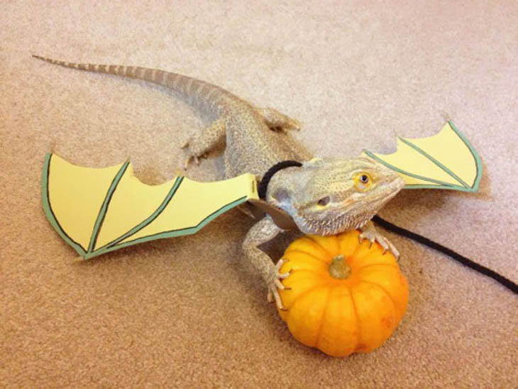 Cutely Costumed Pets