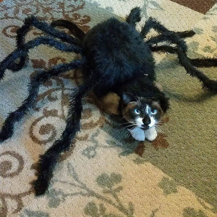 Horribly Cute Halloween Costumes for Pet