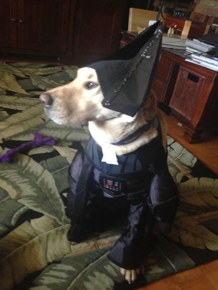 Hilarious Halloween Pet Costumes
