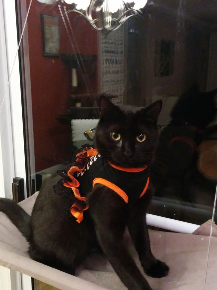 Hilarious Halloween Costumes for Pets