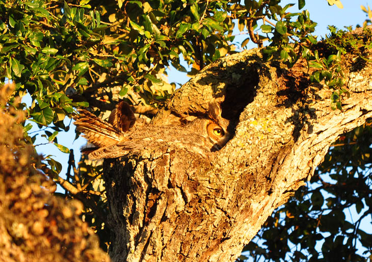 Excellent Examples Of Owl Camouflage