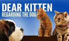 This Old Cat Again Teaching A VERY Valuable Dog Lesson To A Young Kitten. It's Again Hysterical!