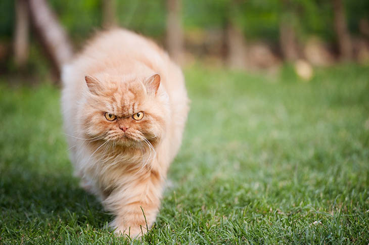 World's most angriest kitten