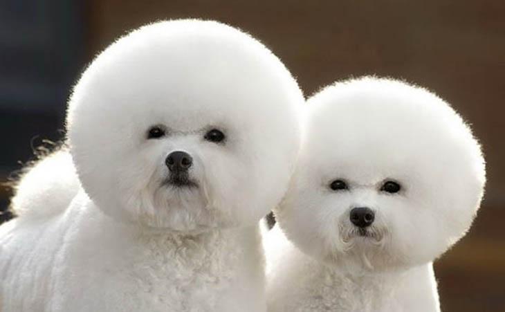 Cute copycat ball of fur.