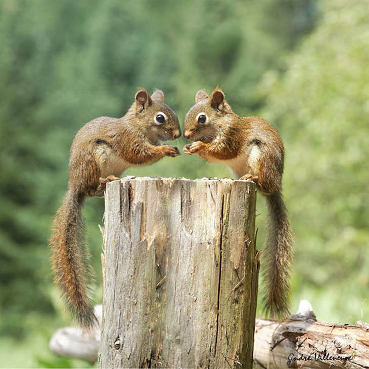 Cute animal twins - Small squirrels can also birth in multiples.