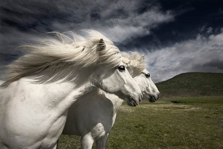 Cute animal twins - Marvelous twin horses.