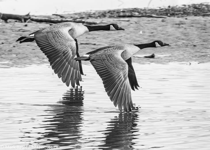Cute animal twins - Flying twin beauty.