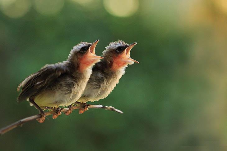 Bird's little newborn twins.