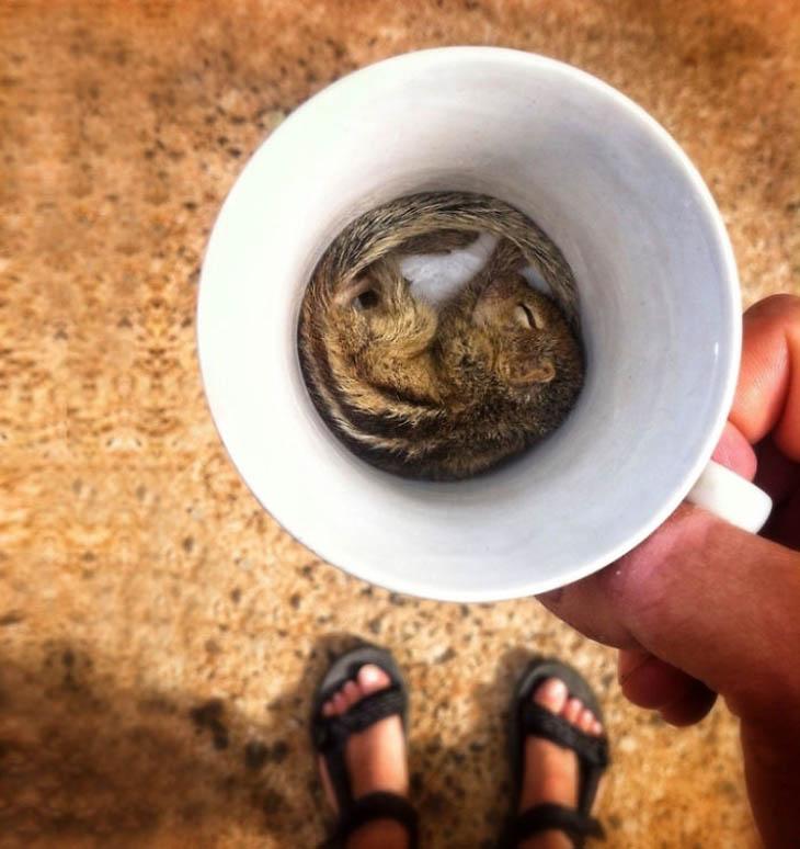 Cute Animals in Cups