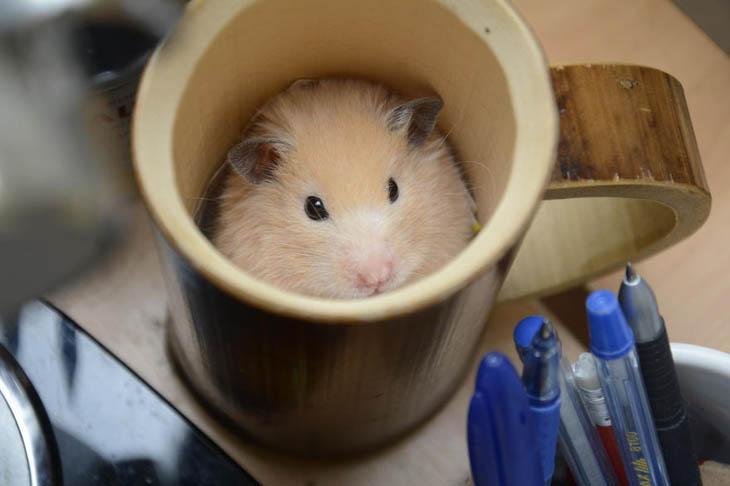 Cups Of Cuteness