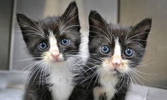 You Won't Able To Tell Apart These 40 Animal Twins. They Are So Identical!