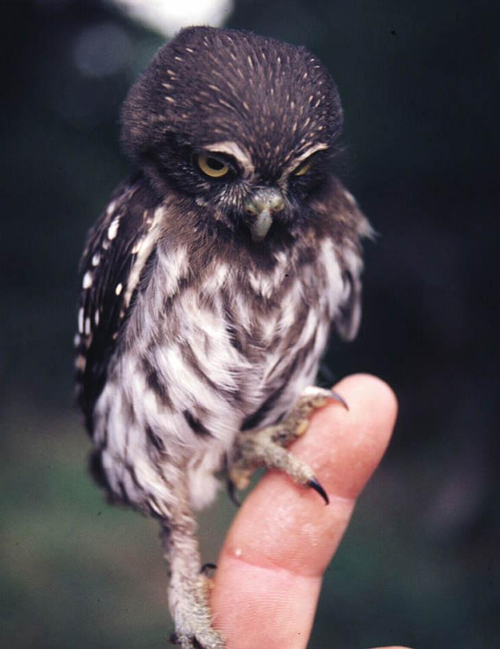 Cute baby animals - Baby Owl