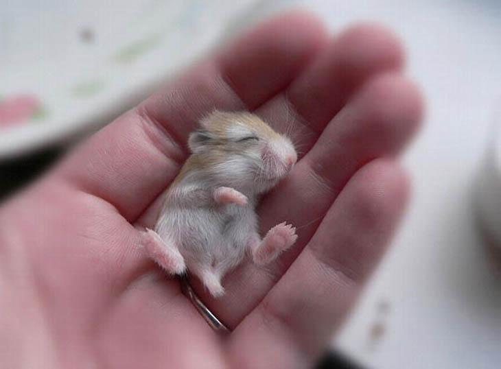 Cute baby animals - Baby Hamster