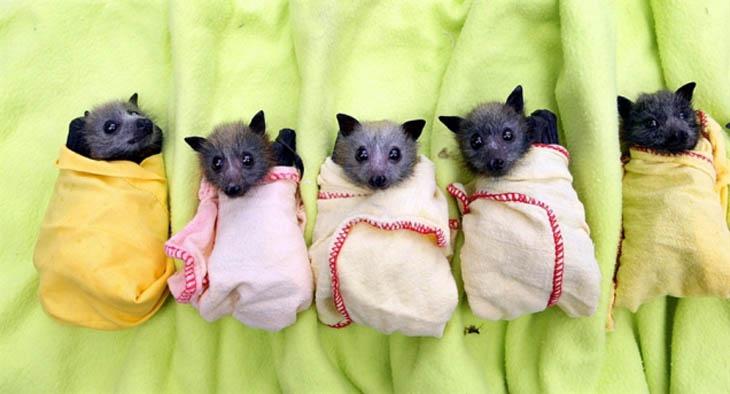 Cute baby animals - Baby Bats