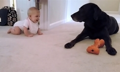 This Baby's First Crawl With Her Dog Will Make Your Day Beautiful. It's Heart Melting!