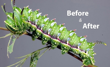 19 Before And After Pictures Of Insect Transformations. #10 Is Pure Awesome!