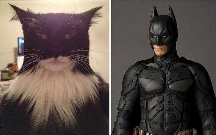 Batman Copycat Cats