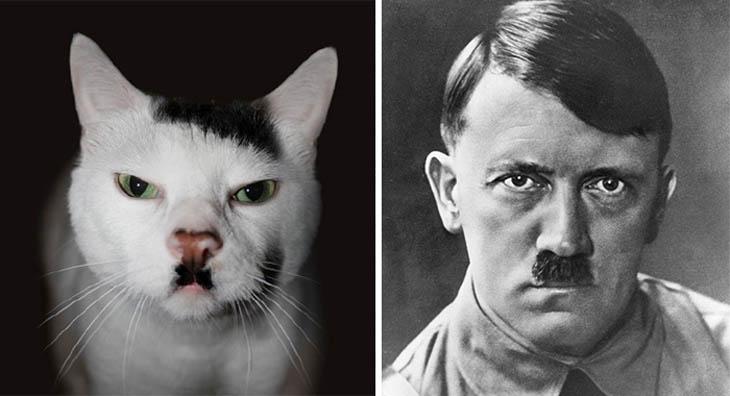Hitler Copycat Cats