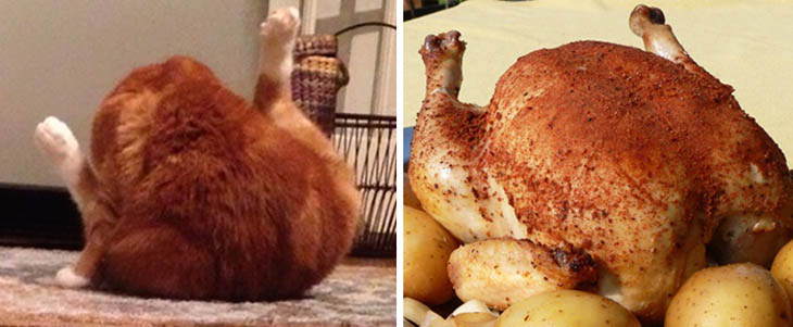 A Roasted Chicken Copycat Cats