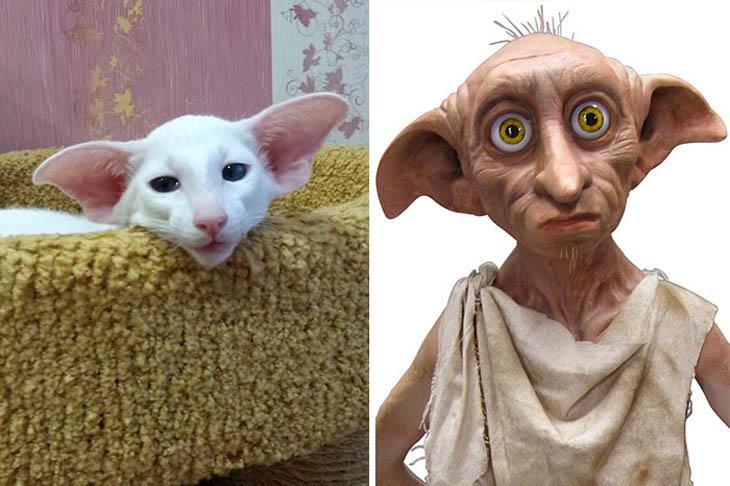 Dobbie Copycat Cats
