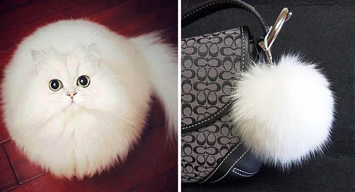 A Fluffy Toy Copycat Cat