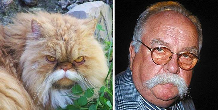 Wilford Brimley Copycat Cat