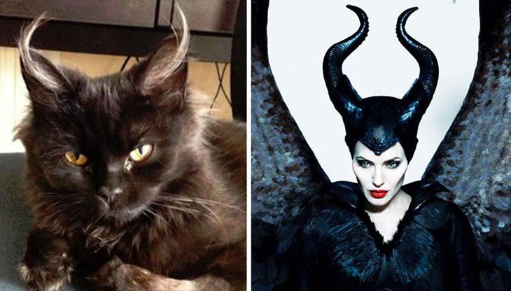 Maleficient Copycat Cat