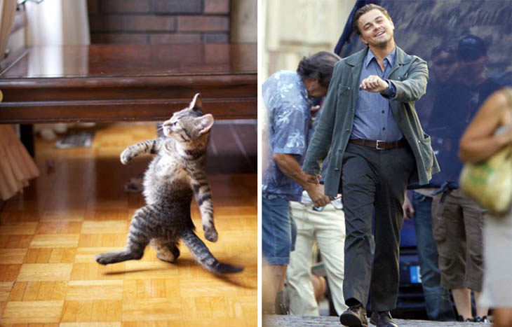 Leo Copycat Strutting Kitty