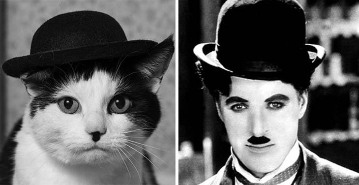 Chaplin Copycat Cat